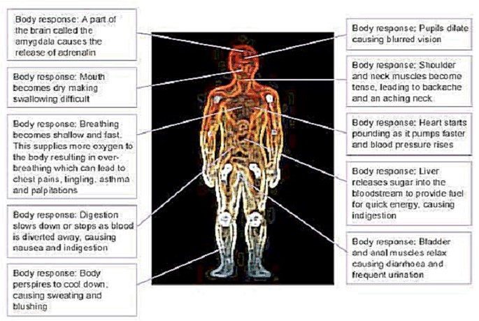 Body reactions to stress